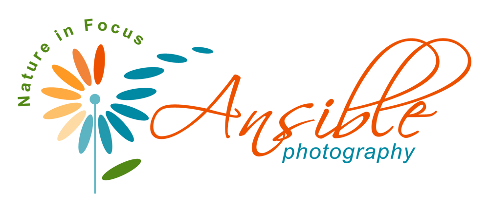 Ansible Photography